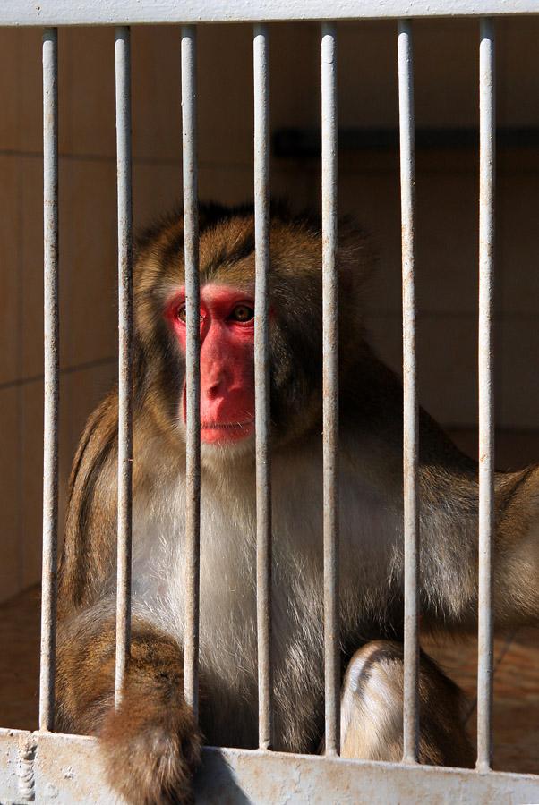 2011_apsny12_monkey5[1]