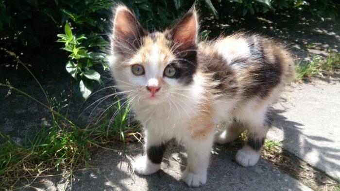 котенок в Никитенском ботаническом саду